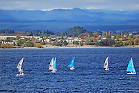 Yachts, sailing boats, Lake Taupo, New Zealand, with Taupo, the township, in the background. 20104145424..Copyright Image from Victor Patterson, 54 Dorchester Park, Belfast, United Kingdom, UK. Tel: +44 28 90661296. Email: victorpatterson@me.com; Back-up: victorpatterson@gmail.com..For my Terms and Conditions of Use go to www.victorpatterson.com and click on the appropriate tab.