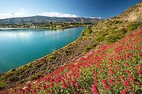 Spring Wildflowers, Lake Dunstan, Cromwell, New Zealand - stock photo, canvas, fine art print