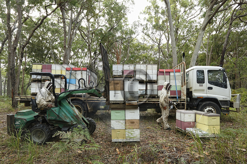 / Preparations for the transhumance at the apiary owned by Christopher Brown, 41 years old. At the Browns, beekeeping is a family affair. Christopher produces honey but he also exports bees from Tasmania to Canada where the Aethina Tumida beetle is no longer present starting in March.///Préparation à la transhumance sur le rucher de Christopher Brown, 41 ans. Chez les Brown, l'apiculture est une affaire de famille. Christopher produit du miel mais il exporte également des paquets d'abeilles de Tasmania vers le Canada ou le coléoptère Aethina Tumida n'est pas présent à partir du mois de mars.