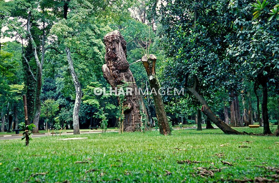 Àrvores do Parque do Ibirapuera. São Paulo. 2006. Foto de Juca Martins.
