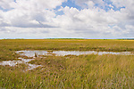 Taylor Slough makes up part of the Everglades  ecosystem.