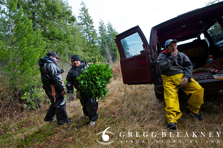 A group of licensed salal pickers from Oaxaca, Mexico on the Olympic Peninsula.