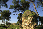 Israel, ruins from the Crusader period in Koach forest