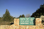 Israel, Baram forest in the Upper Galilee