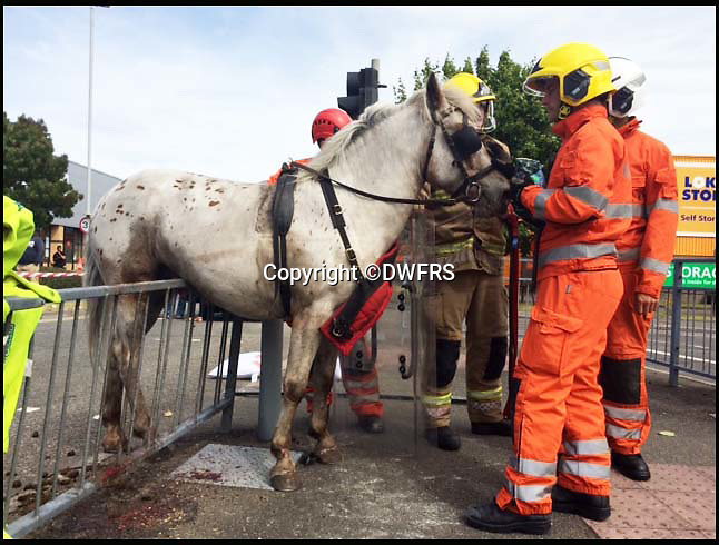 BNPS.co.uk (01202 558833)<br /> Pic: DWFRS/BNPS<br /> <br /> Don't Nag, but I think i'm trapped....<br /> <br /> This horse had a hairy moment after it got spooked and stuck on some railings at a busy road junction.<br /> <br /> Firefighters and an animal rescue team had to use hydraulic cutting equipment to free the trapped animal.<br /> <br /> The pony and cart were travelling along a busy road in Poole, Dorset at 2.30pm yesterday (Thurs) when the horse was frightened by a car and bolted into the railing.