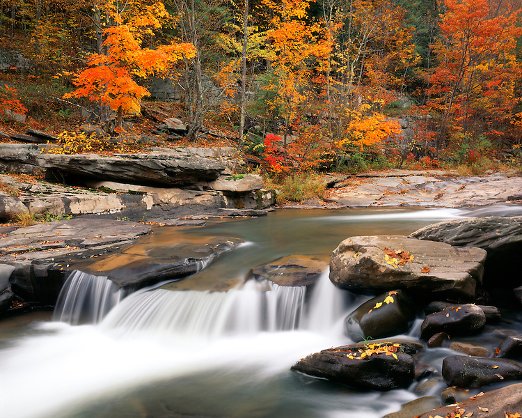 Fall color and waterfall along Stony Clove Creek; Catskill Park and Preserve, NY