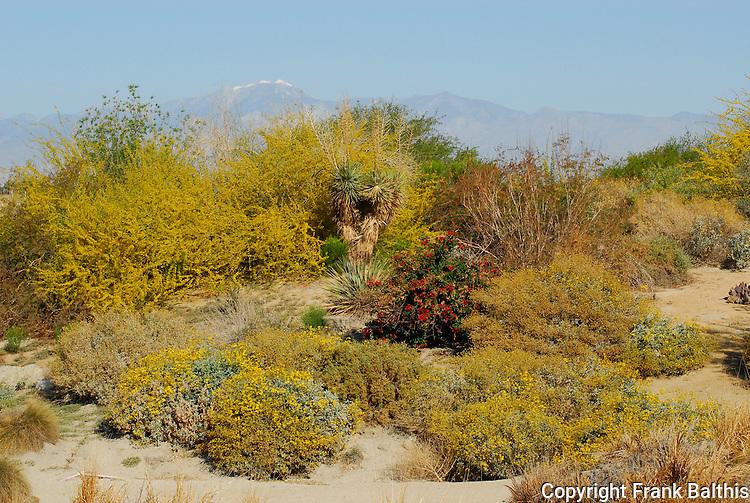 Desert Willow area in Palm Desert