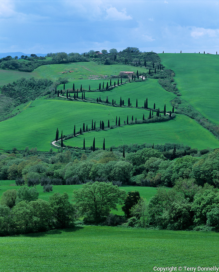 Tuscany, Italy<br /> Curving road lined with Cypress Trees at La Foce, near Montepulciano in the Val d'Orcia