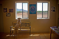 erath  160436 8/30/09-  A vinyard dog looks out the window of the Rancho Rossa (CQ) Vineyards tasting room. (Pat Shannahan/ The Arizona Republic)