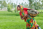 In order to raise her home a few inches, Komela Khatun carries dirt in a basket in West Fasura, a village on an island in the Brahmaputra River in northern Bangladesh. Severe flooding in August 2017 destroyed the island's crops but RDRS Bangladesh, a member of the ACT Alliance, provided emergency cash grants to vulnerable island families so they could reestablish their household economies and restart their lives.