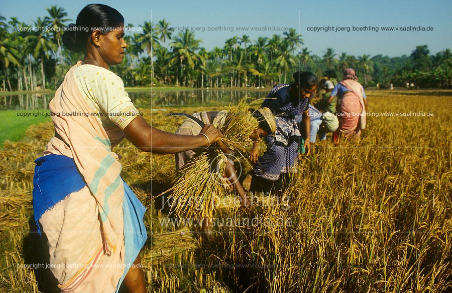 INDIA Karnataka Taccode, women harvest paddy manual with sickle at a farm near Mangalore / INDIEN Frauen ernten Reis mit einer Sichel auf einem Bauernhof