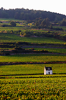 vineyard hut vineyard beaune cote de beaune burgundy france