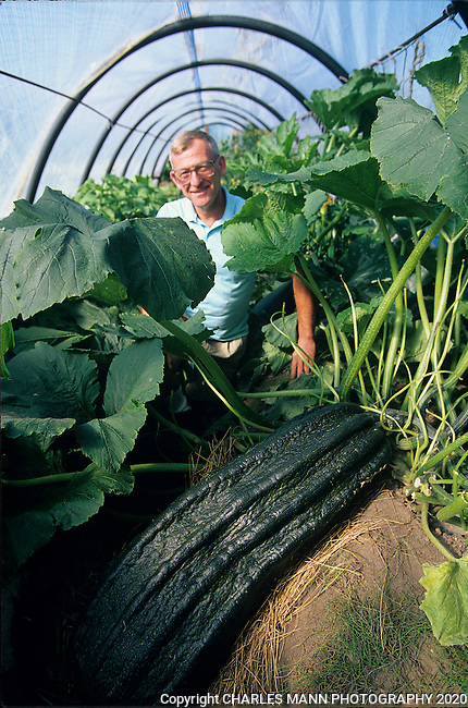 A Guinness World Record Holder for growing giant plants, John Evans of Matanuska, Alaska, poses with his 70 pound zucchini as the summer growing season comes to a close.