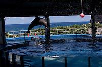 Dolphins Sea Life Park, HI