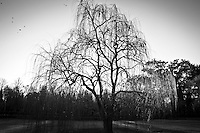 Prince's garden in Aranjuez, the beautiful garden of the royal court with old trees, gorgeous houses, mansions, wild animals and near the Tajo river. Tree in black & white