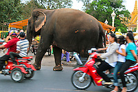 Sambo the Elephant Walking Through Traffic, Phnom Penh.  Though Sambo's headquarters is a Wat Phnom, where he entertains visitors, Sambo also wanders around town, never mind the traffic, on his way to other events in town.  His nickname is Sammy.