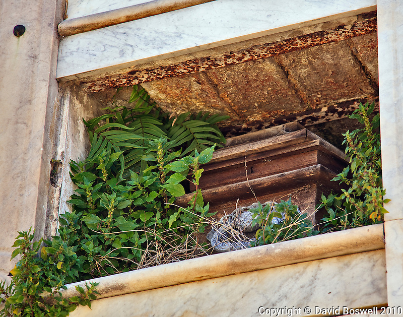 Life abounds, as plants grow amidst death and decay in the Cementario de la Recoleta in Buenos Aires, Argentina.