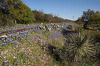 Bluebonnets and yucca follow along the railroad tracks, Texas Hill Country rail road train trains blue bonnets Pink Phlox butter cup buttercups track tracks prickly pear cactus
