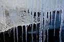 Norway, Svalbard, icicles
