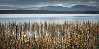 Reeds at Lake Mahinapua jetty, South Westland, West Coast, New Zealand, NZ