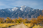 Snow-covered Mount Williamson, a silent sentinel, looms over a lonely dirt road in Manzanar, the Japanese internment camp in the Eastern Sierras.