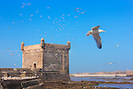 Sqala du Port in Essaouira against blue sky filled with flying seagulls.