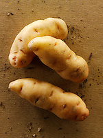 Fresh organic Anya  Potatoes