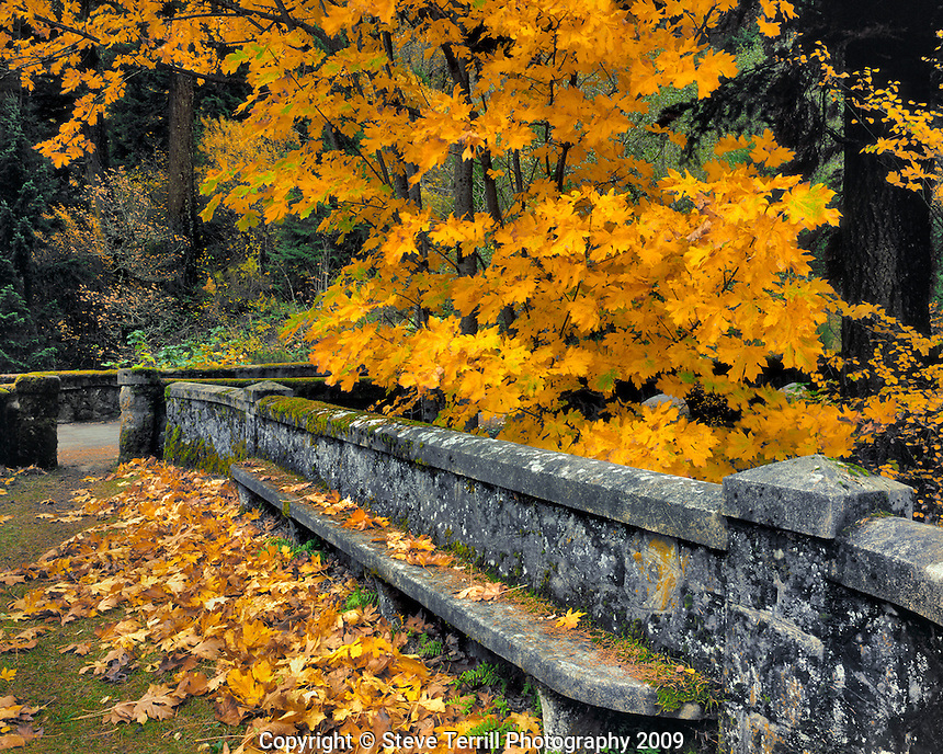 Stone wall and bench on cliff framed by big leaf maple trees above Eagle Creek in Columbia River Gorge National Scenic Area, Oregon