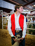 Lamb for sale in the ring, 54th annual Junior Livestock Auction during Sunday at the 80th Amador County Fair, Plymouth, Calif.<br /> .<br /> .<br /> .<br /> .<br /> #AmadorCountyFair, #1SmallCountyFair, #PlymouthCalifornia, #TourAmador, #VisitAmador