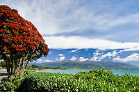 Pohutukawa in red flower on the beach front at Kaikoura, looking towards the Kaikouras, South Island