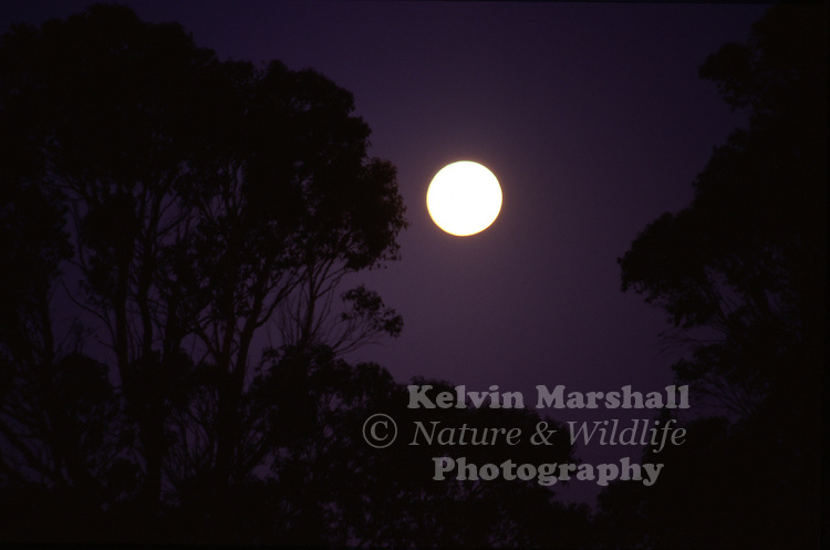 A moonscape Silhouette surrounded by eucalypt forest.