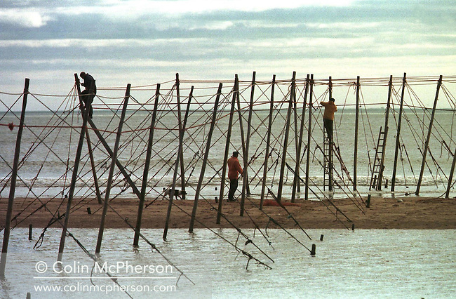 Fishermen at St. Cyrus in Aberdeenshire setting up stake nets on the beach to catch salmon and sea trout between April and August. This age-old practice was abandoned in 1998 due to dwindling fish stocks. In 1998 the fishery discontinued the use of labour-intensive stake nets when the company which owned the fishery sold the fishing rights. The once-thriving Scottish salmon netting industry fell into decline in the 1970s and 1980s when the numbers of fish caught reduced due to environmental and economic reasons. By 2007, only a handful of men still caught wild salmon and sea trout using traditional methods, mainly for export to the Continent.