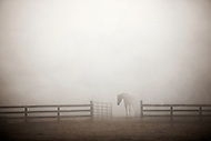 A horse emerging from fog.