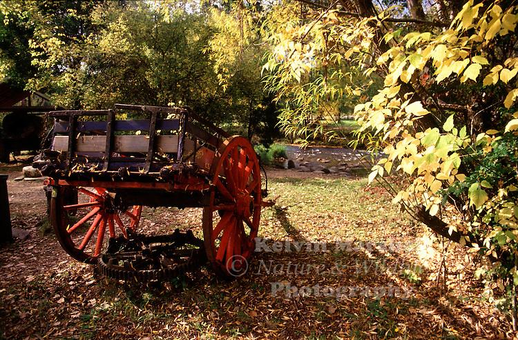 Old abandoned wagon left in a farmers backyard. Bright - Victoria, Australia.