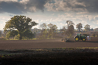 Rolling drilled wheat in Rutland<br /> &copy;Tim Scrivener Photographer 07850 303986<br />      ....Covering Agriculture In The UK....