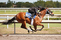 #60Fasig-Tipton Florida Sale,Under Tack Show. Palm Meadows Florida 03-23-2012 Arron Haggart/Eclipse Sportswire.