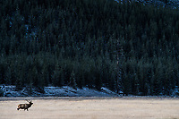 Yellowstone National park nella foto parco geografico Yellowston National Park 02/10/2017 foto Matteo Biatta  Yellowstone National Park in the picture park geographic 02/10/2017 Yellowstone National Park photo by Matteo Biatta