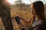 Cheetah (Acinonyx jubatus) biologist, Xia Stevens, checking camera trap, Kafue National Park, Zambia