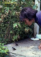 BA17-005z  Barn Swallow - girl watching young on ground - Hirundo rustica