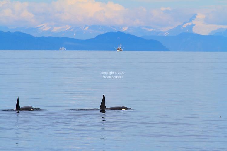 Alaska's Inside Passage aboard the National Geographic Sea Bird