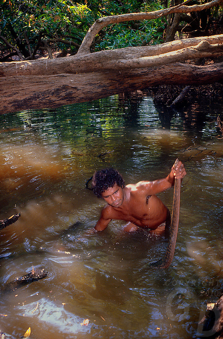 Tribal Aboriginal hunting for File snakes and Tortoise,Arnhem Land Northern Territory, Australia
