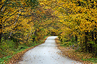 Unpaved country road with autumn foliage, Cuttingsville, Vermont, USA.