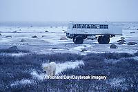 01874-03101 Polar Bears (Ursus maritimus) near Tundra Buggy   Churchill  MB