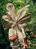PANAMA, Panama City, a man holds a large leaf in front of his face in the Darien jungle, Central America