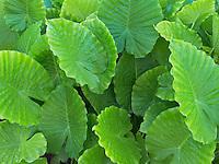 Close up of tropical foliage. St. John. Virgin Islands.