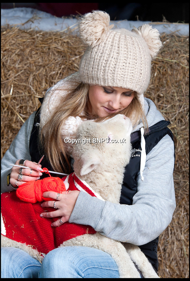 BNPS.co.uk (01202) 558833<br /> Picture: LauraJones/BNPS<br /> <br /> Farm park assistant Emma Shaw (28) knits a jumper for the Poll Dorset lambs at Farmer Palmer's Farm Park near Wareham, Dorset ready for the cold weather.<br /> <br /> These cosy lambs are getting into the festive spirit after being given their own knitted Christmas jumpers to wear.<br /> <br /> Holly and Ivy are Dorset Poll sheep which are the only breed to be born year round.<br /> <br /> The pair, the last of the year to arrive at an activity farm, were let outdoors with the rest of the lambs but staff brought them back inside when they noticed they were shivering.<br /> <br /> And to give them extra insulation, they have knitted Holly and Ivy two seasonal sweaters to wear at night.<br /> <br /> The woolly jumpers have been made to match their names, with red wool for Holly and a bright green colour for Ivy.<br /> <br /> The two-month-old lambs wear the jumpers during the chilly nights at Farmer Palmers Farm Park near Poole, Dorset.