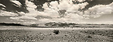 USA, California, Death Valley National Park, Furnace Creek landscape (B&W)