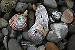 shells on rocky beach