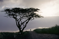 A lone rider passes an Acacia tree on the Indian Ocean island of Mauritius. I made this image while retracing Mark Twain's journey around the world exactly 100 years earlier.
