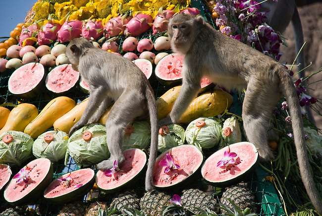 Monkeys climb on the Fruit display at the Monkey Festival in Lop Buri